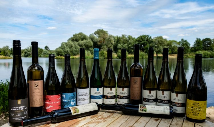 BerlinerWineTrophy all